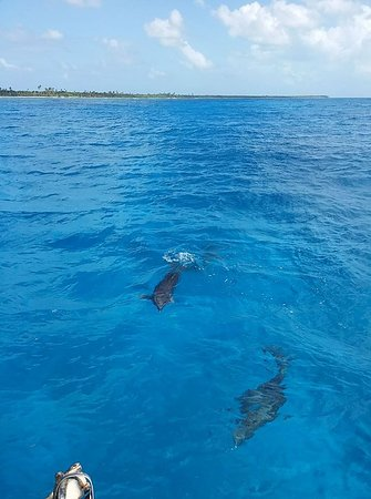 Bayahíbe, República Dominicana: i delfini che ti accompagnano... :D