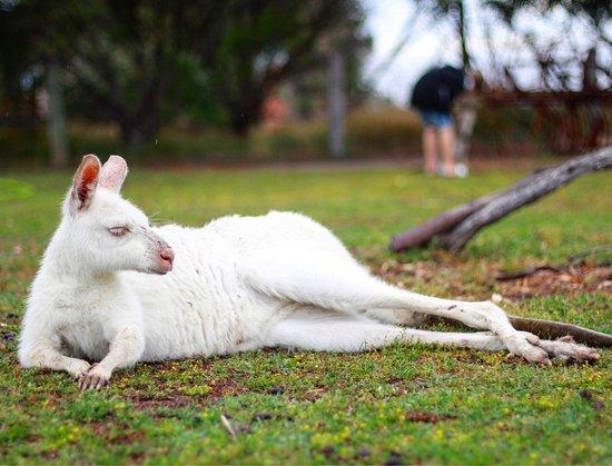 Grantville, ออสเตรเลีย: Photo's taken at Maru Koala and Animal Park. 27-12-16