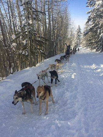 Dubois, WY: Dogsledding break and photo opportunity
