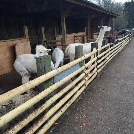 Daisy the Cow - Picture of Christmas Tree Farm, Bromley - TripAdvisor