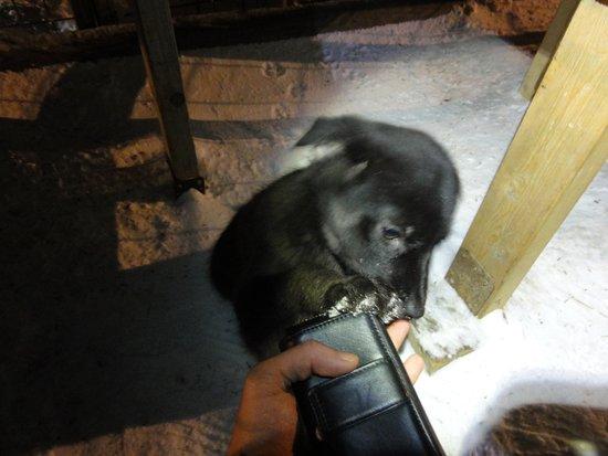 Longyearbyen, Noruega: Pet the puppies !