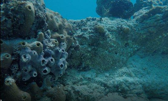 Current Cut : cool coral