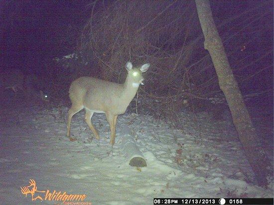 Webster Pond: Deer Back Trail