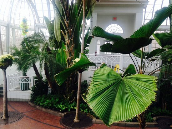 Franklin Park Conservatory and Botanical Gardens: Array of plants
