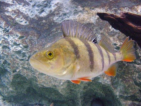Eppe-Sauvage, France : Visite de l'Aquarium , belle découvertes et infos utiles