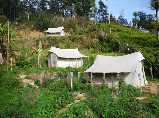 The Three Tents at Zostel Ooty & The Three Tents at Zostel Ooty - Picture of Zostel Ooty Ooty ...