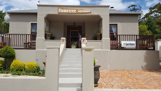 Flametree Guesthouse 사진