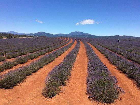 Ταζμανία, Αυστραλία: photo4.jpg