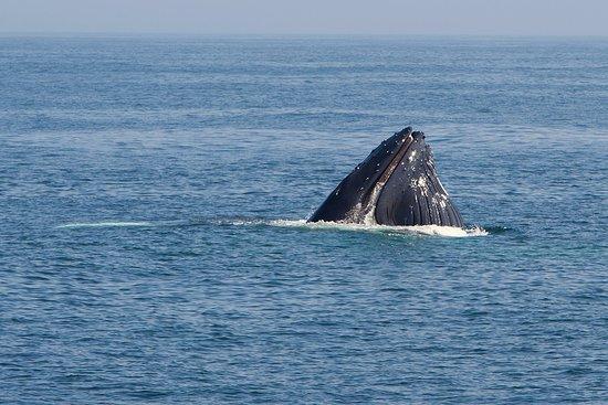 Mirissa Whale Sprinter