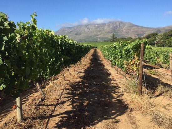 Constantia, Güney Afrika: photo1.jpg