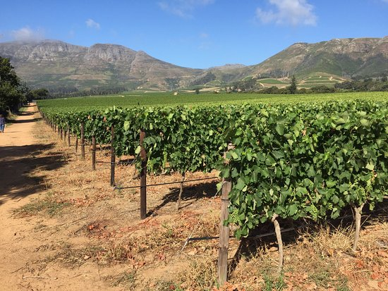 Constantia, South Africa: photo2.jpg