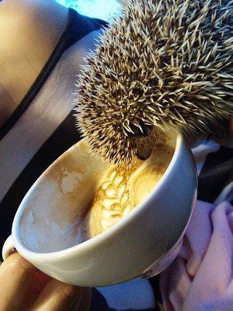 Kawiarnia Bienkula