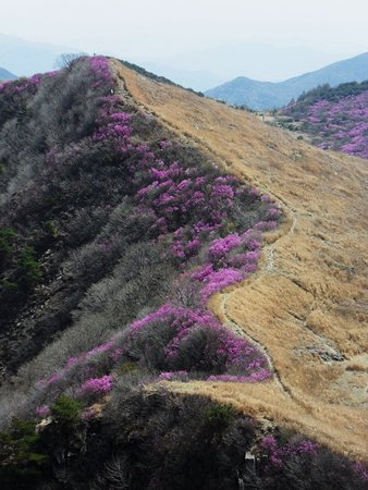 Changnyeong-gun, Corea del Sur: the ridge in May