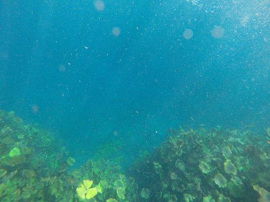 Rio Verde, Meksyk: más de 30 metros de profundidad.