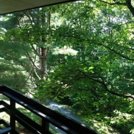 Skyline Lodge and Restaurant: LIKE LIVING IN A TREE HOUSE