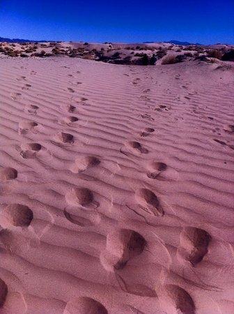 Viesca, Mexico: Algunos de mis compañeros se adelataron para dejar estas huellas en la arena y poder captarlas