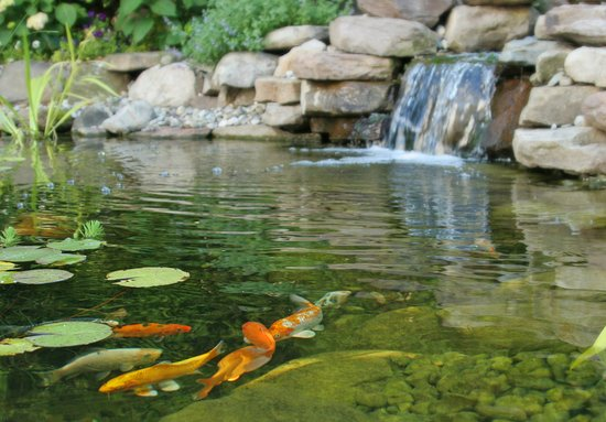 Chester Heights, PA: Have a restful day next to the waterfall and koi pond.