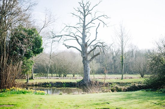 Thompson, UK: View from the walled garden