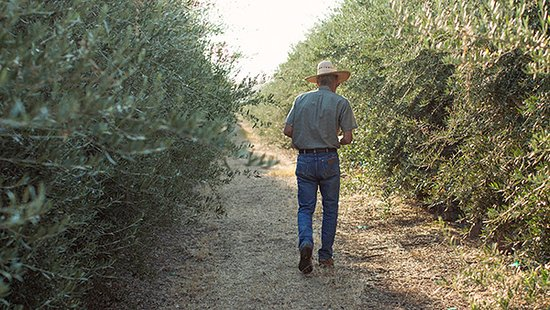 Corning, CA: American Olive Farmer Since 1947