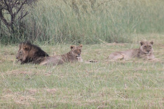 Zdjęcie Mabula Private Game Reserve