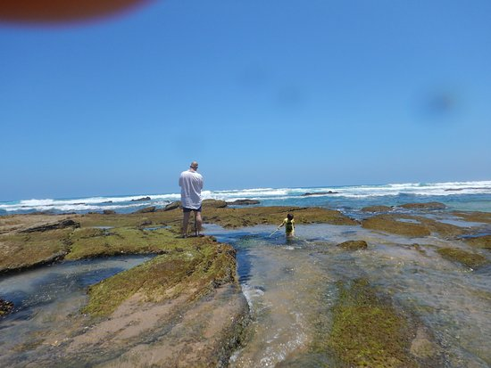Wilderness, Afrika Selatan: Exploring the rock pools at low tide