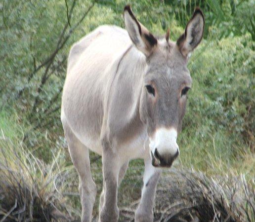 Wild Donkeys Seen as We Drive to Black Meadow Landing