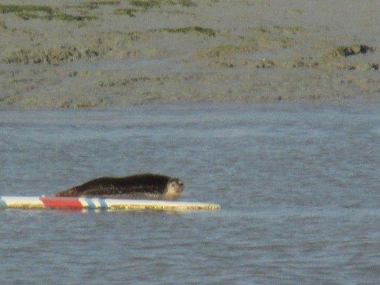 Crehen, France: Un des phoques