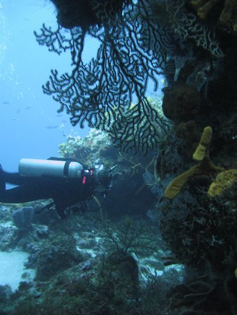 BLUE Project - Dive Shop : swimming thru the coral