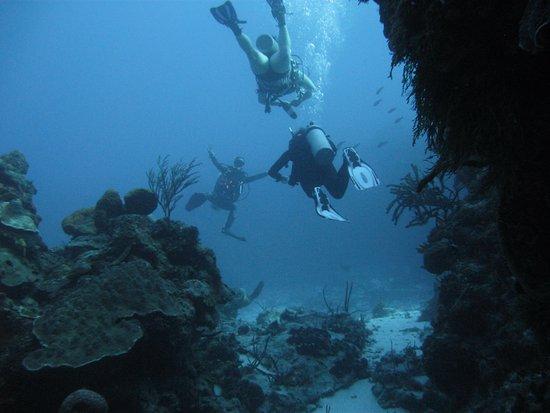 BLUE Project - Dive Shop : Sandy, our Dive Master