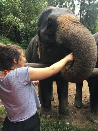 photo5.jpg - Picture of Phang Nga Elephant Park, Phang Nga ...