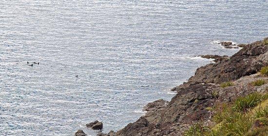 Rawhiti, Nueva Zelanda: dolphin pod