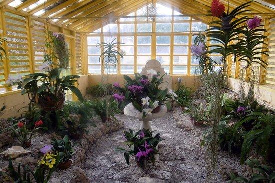 Fleurs Picture Of Bonnet House Museum And Gardens Fort Lauderdale Tripadvisor