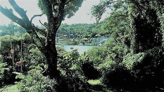Mango Beach Inn: Beautiful garden and views from Blue Bamboo Room.