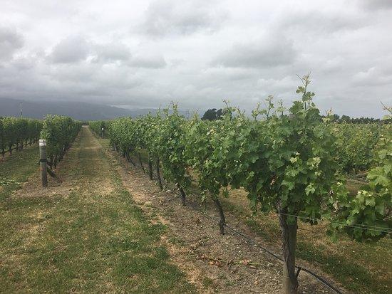 Renwick, Nueva Zelanda: ぶどう畑