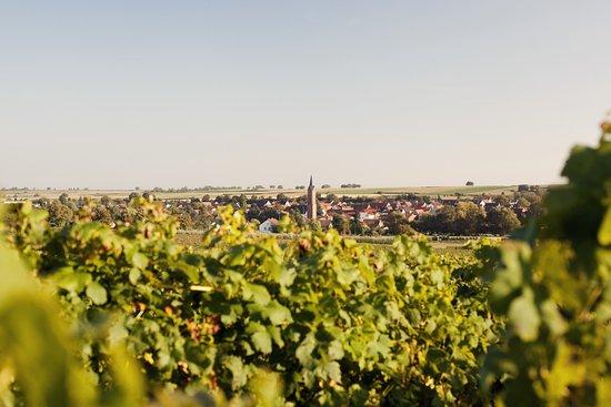 Landau in der Pfalz, ألمانيا: Die Pfalz - ein Paradies !