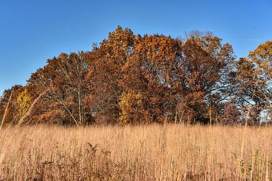 Lisle, IL: Prairie at Morton Arboretum