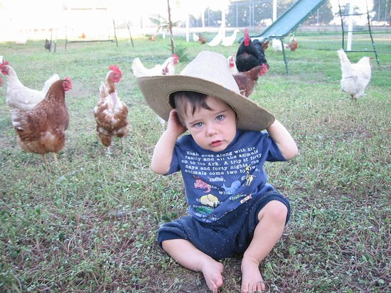 Yerong Creek, Australia: Guest's Child hanging with the chickens.