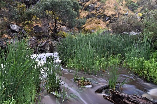 Hindmarsh Valley, Australia: About 50m downstream of the falls amongst the reeds