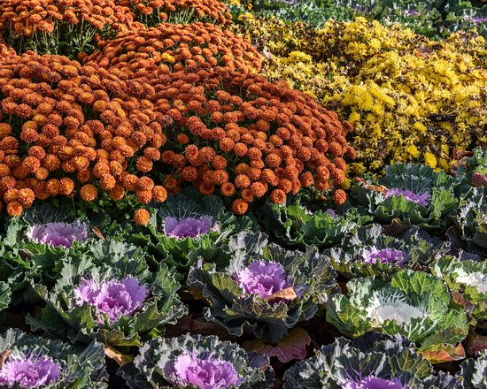 First Division Museum at Cantigny: Gardens at Cantigny