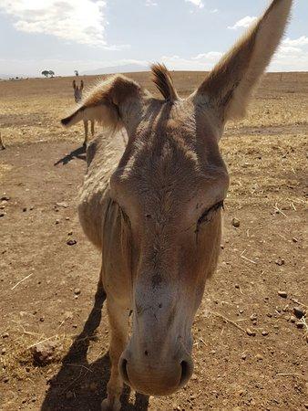 Caledon, Republika Południowej Afryki: IMG-20161228-WA0011_large.jpg