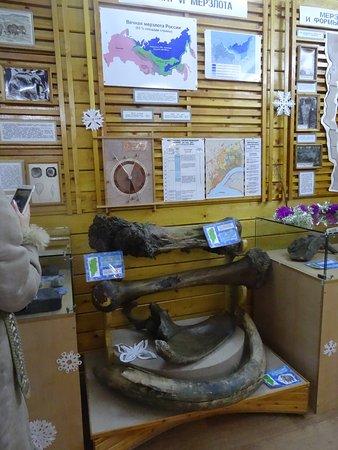 Igarka, روسيا: В наземной части музея хранятся кости мамонтов, геологические образцы и др.