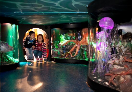 Hands On Children's Museum: Can you find this hidden aquarium when you come to visit?