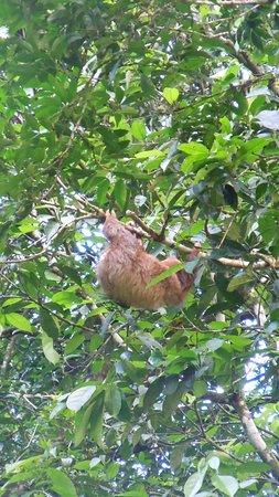Puerto Viejo de Sarapiqui, Costa Rica: luiaard in de achtertuin ;o)