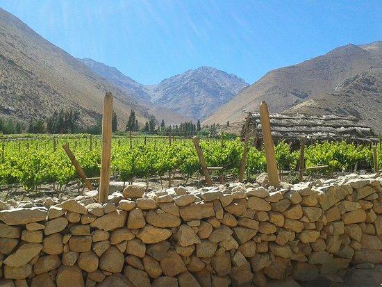 Pisco Elqui, Chile: Cielo, montañas y viñas.