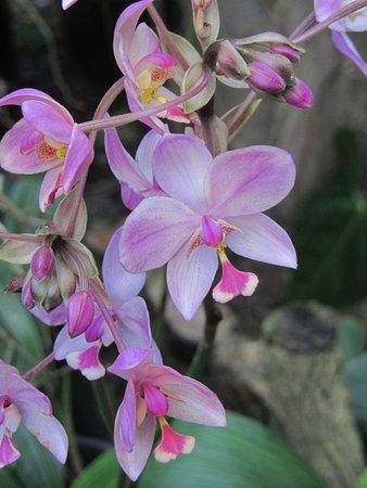 Orchidee in de serre - Photo de Jardin Botanico de Viñales ...