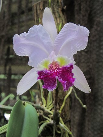 Orchidee in de serre - Picture of Jardin Botanico de Vinales ...