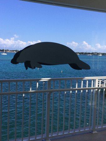 Manatee Lagoon: Artistic View Of The Intercoastal Waterway. This Is A  Sticker On The
