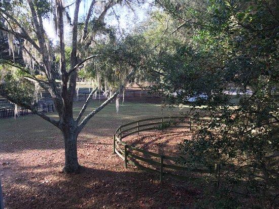 Reddick, FL: photo0.jpg