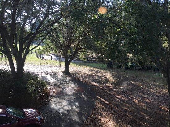 Reddick, FL: photo1.jpg