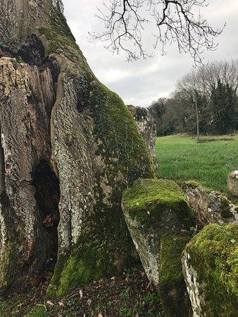 Bruff, Irland: photo5.jpg